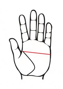 マスカケ線、左手