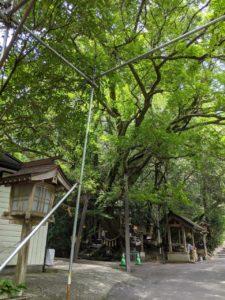 八大龍王水神社